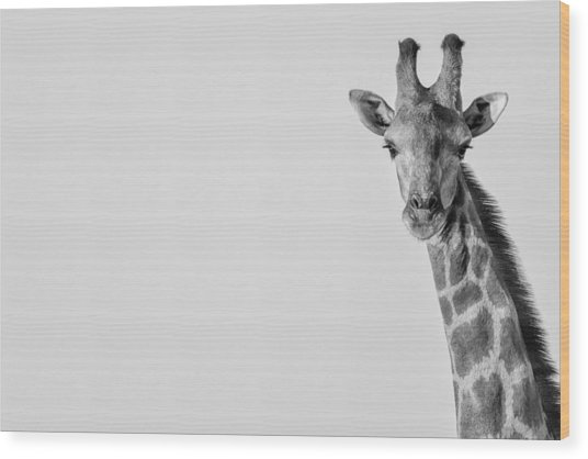 Wood Print featuring the photograph Curious by Rand