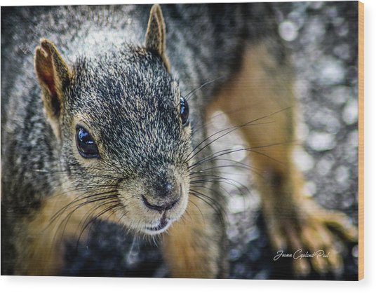 Curious Squirrel Wood Print