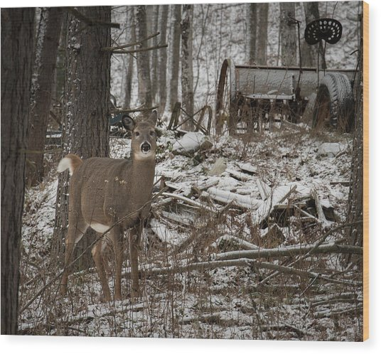 Curious Whitetail Wood Print