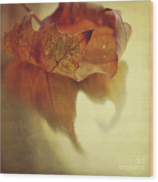 Curled Autumn Leaf Wood Print
