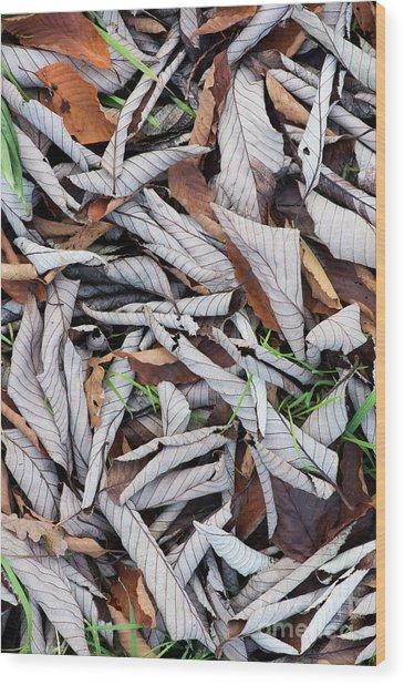 Curled Leaf Litter Wood Print