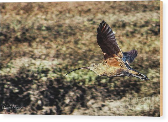 Curlew In Flight Wood Print