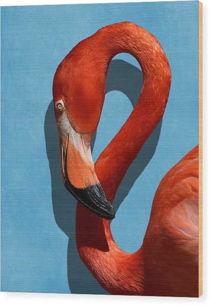 Curves, A Head - A Flamingo Portrait Wood Print