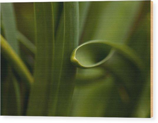 Curves Of Nature Wood Print