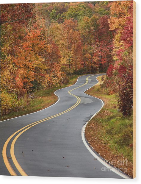 Curvy Road In The Mountains Wood Print