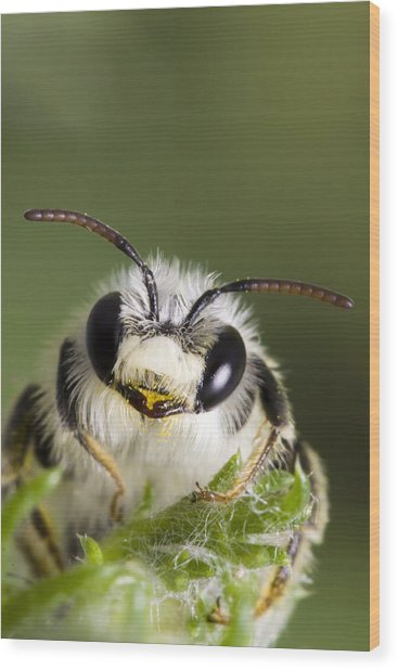 Cute Bee Wood Print by Andre Goncalves