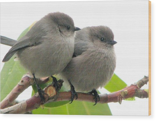 Cute Chicks Wood Print