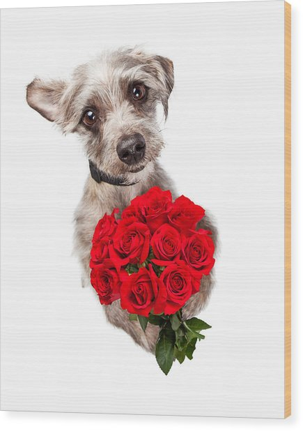 Cute Dog With Dozen Red Roses Wood Print
