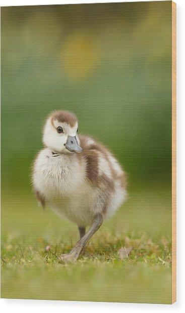 Cute Gosling Wood Print