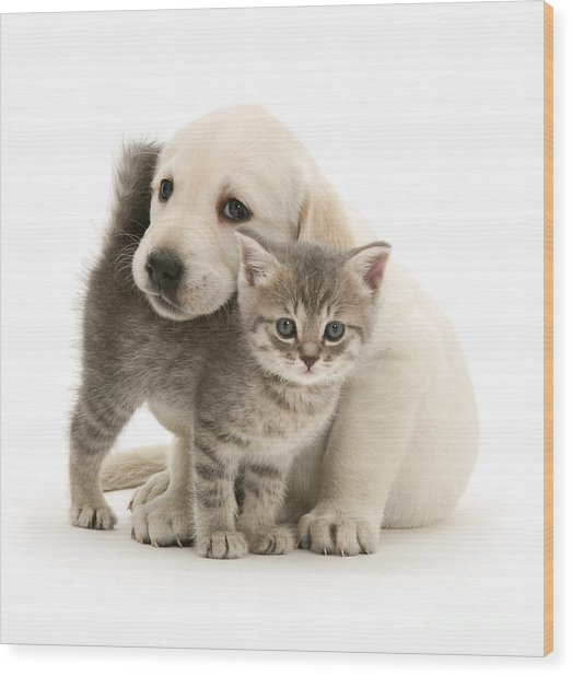 Cute Kitten And Perfect Puppy Wood Print
