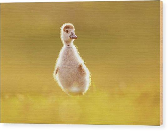 Cute Overload - Baby Gosling Wood Print