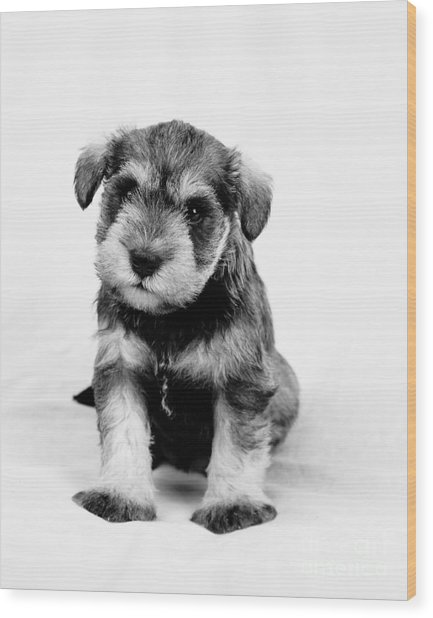 Cute Puppy 1 Wood Print