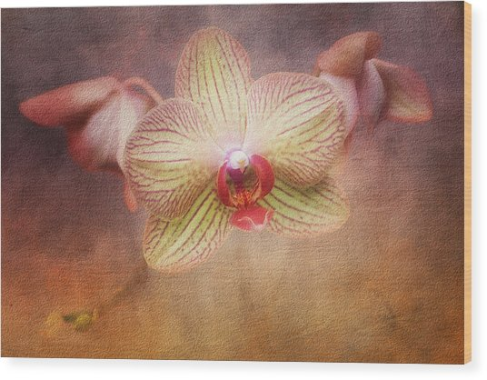 Cymbidium Orchid Wood Print