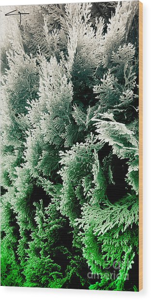 Cypress Branches No.5 Wood Print