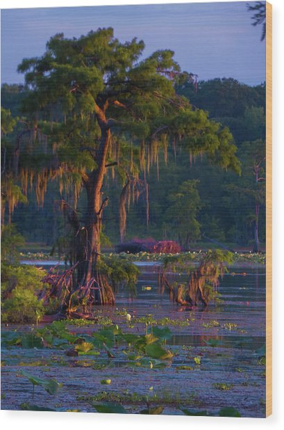 Cypress In The Sunset Wood Print