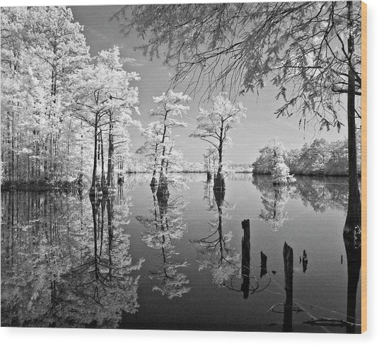 Cypress In Walkers Mill Pond Wood Print