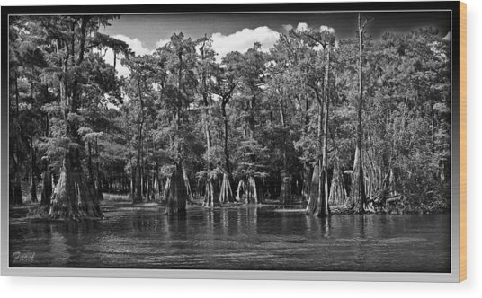 Cypress On The Suwannee Wood Print