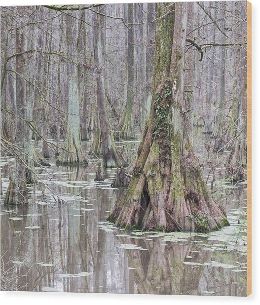 Cypress Swamp 01 Wood Print