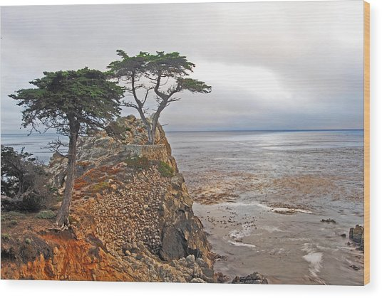 Cypress Tree At Pebble Beach Wood Print