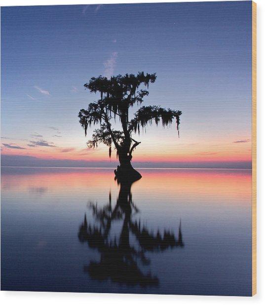 Cypress Tree Wood Print