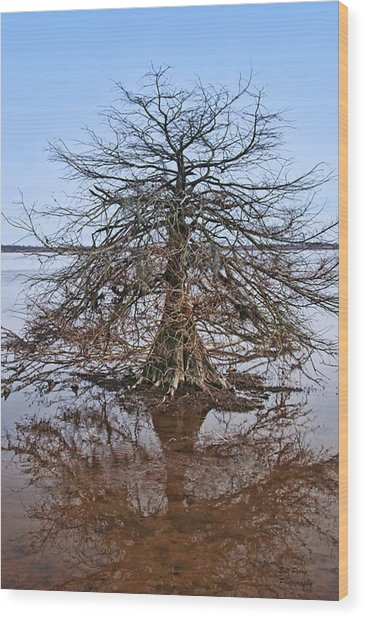 Cypress Tree In The Marsh Wood Print by Bill Perry