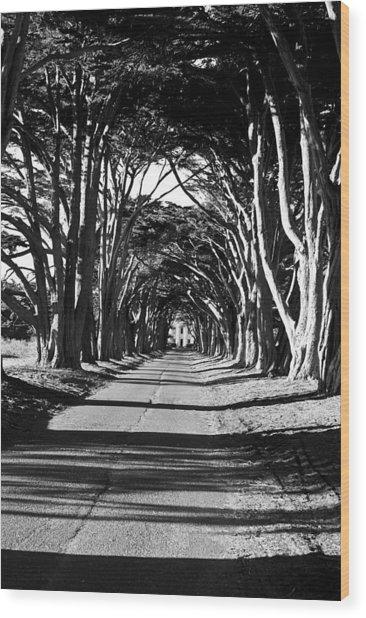 Cypress Tree Tunnel Wood Print