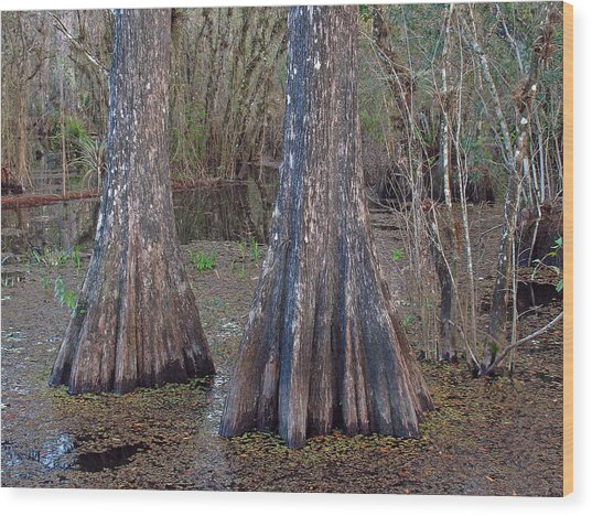 Cypress Trees At Duck Pond Wood Print by Juergen Roth