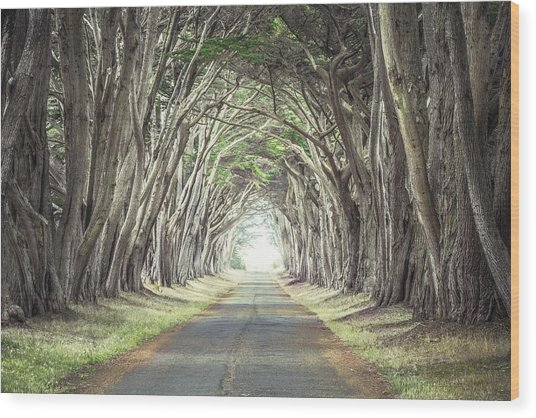 Cypress Tunnel Wood Print
