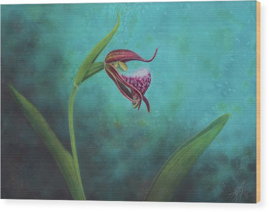 Cypripedium Arietinum V Wood Print