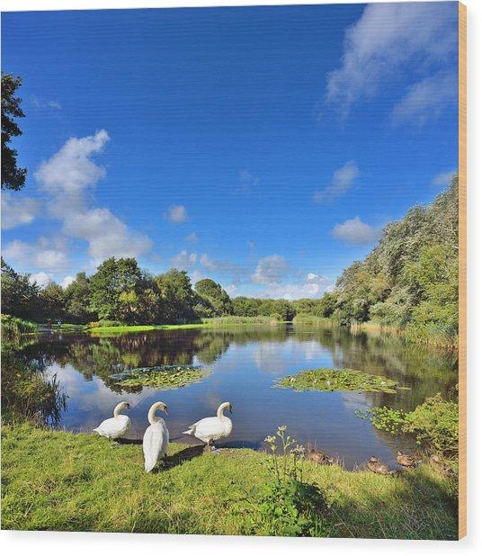 Dafen Pond Wood Print