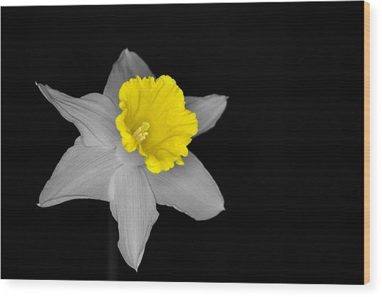 Daffo The Dilly Isolation Wood Print