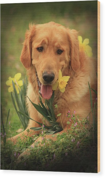 Daffodil Dreams Wood Print
