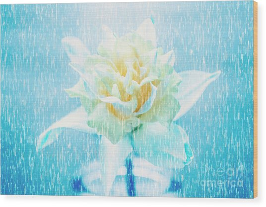 Daffodil Flower In Rain. Digital Art Wood Print