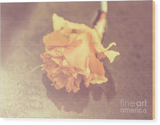 Daffodil Reflections  Wood Print