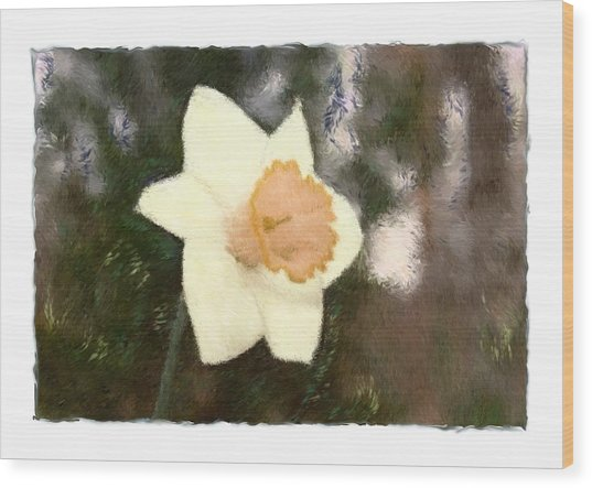 Daffodil Wood Print by Sandy Belk