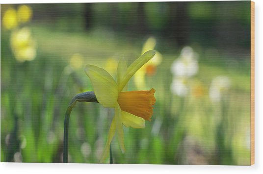 Daffodil Side Profile Wood Print