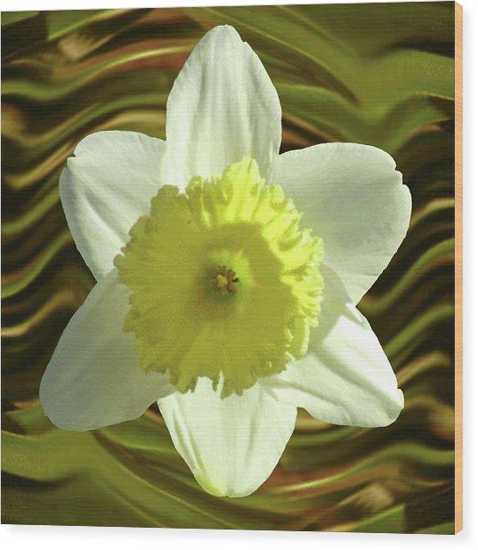 Daffodil Swirl Wood Print