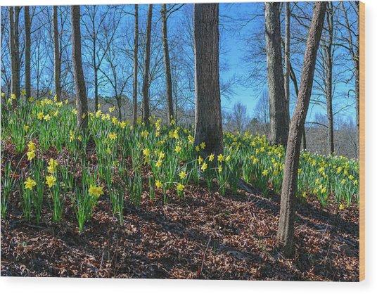 Daffodils On Hillside Wood Print