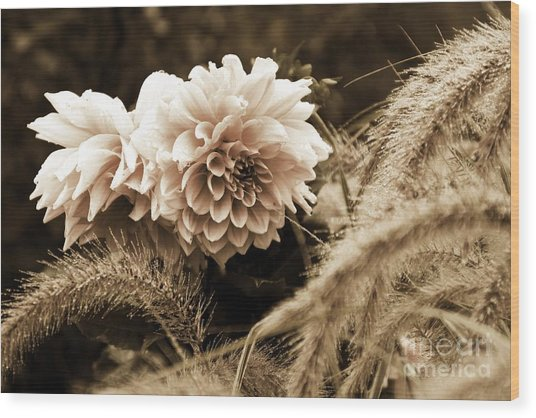 Dahlia After A Shower Wood Print