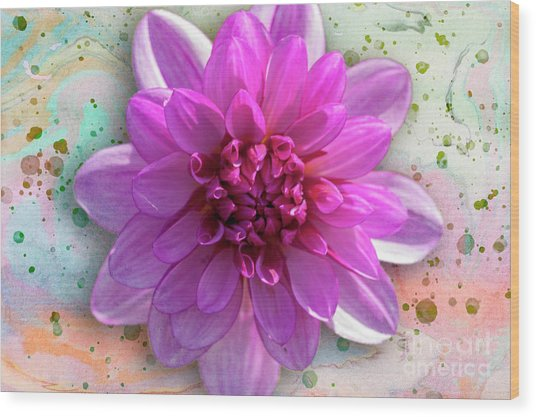 Dahlia Flower Series One Wood Print