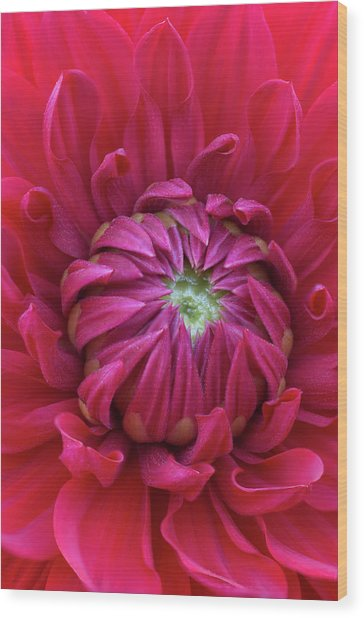 Dahlia Heart Wood Print