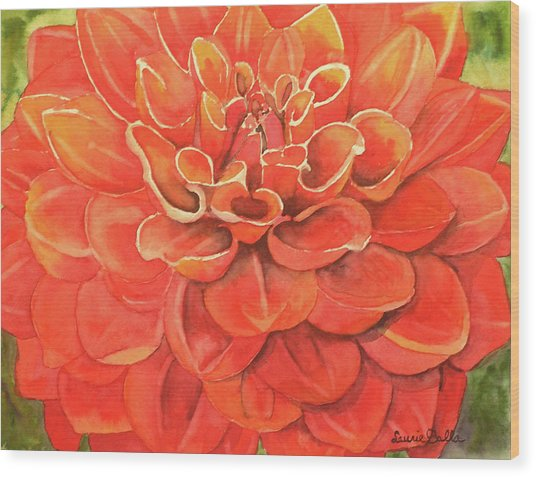 Dahlia IIi Wood Print by Laurie Balla
