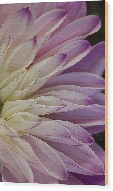 Dahlia Petals 2 Wood Print