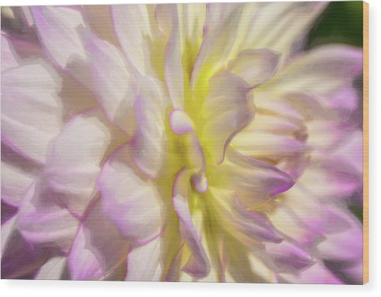 Dahlia Study 5 Painterly  Wood Print