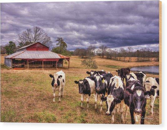 Dairy Heifer Groupies The Red Barn Dairy Farming Art Wood Print