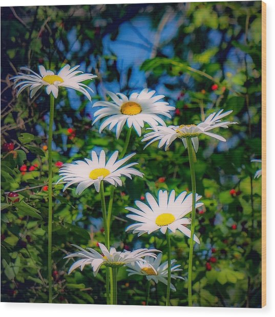 Daisies And Friends Wood Print