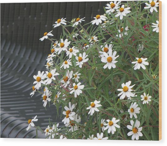 Daisies By The Bench Wood Print by Sylvia Wanty