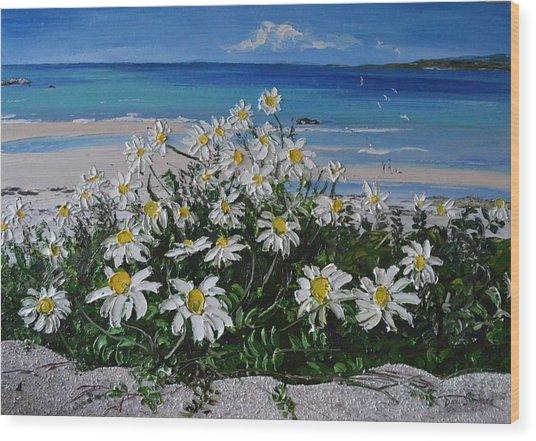 Daisies Coral Strand Connemara Wood Print