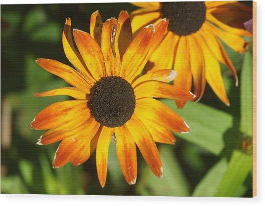 Daisy 8 Wood Print