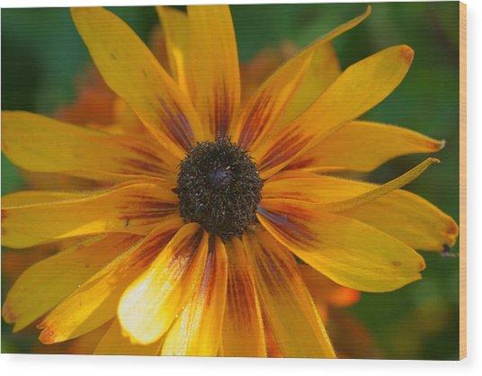 Daisy 9 Wood Print